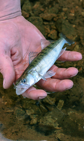 Guide de pêche en famille, Cantal Aubrac