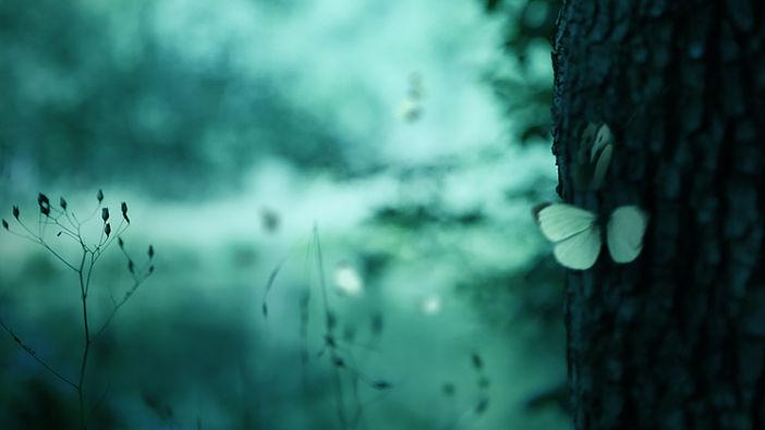 Butterfly_Pool_01.jpg