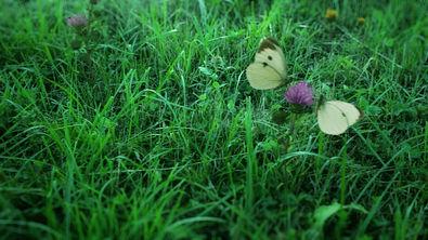 Butterfly_Field_01.jpg