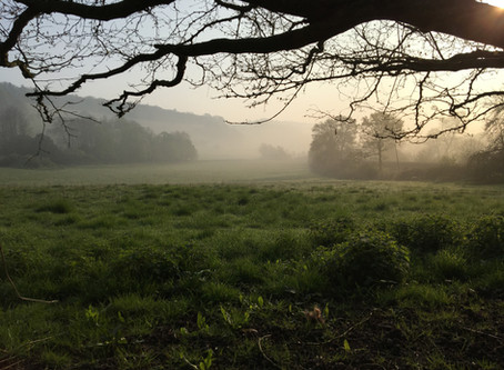 Wednesday Morning Walk