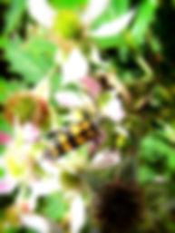 firebåndet_blomsterbuk1_pe.jpg