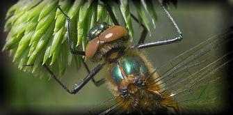 grøn smaragd3_pe.jpg