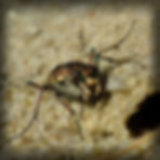 hybrida3_pe.jpg