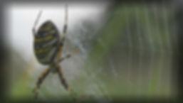 hvepsekop1_pe.jpg