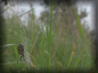 hvepsekop2_pe.jpg