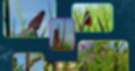 Screenshot_2018-09-08 Wix' hjemmesideedi