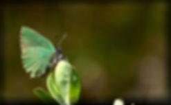 grøn busk1_pe.jpg