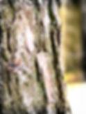 tømmermand5_pe.jpg