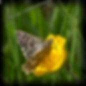 spættet_bredpande2_pe.jpg