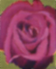 abelartsf 'Rose' ©2002