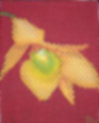 abelartsf 'Dendrobium' ©2001