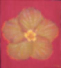 abelartsf 'Hibiscus' ©2002