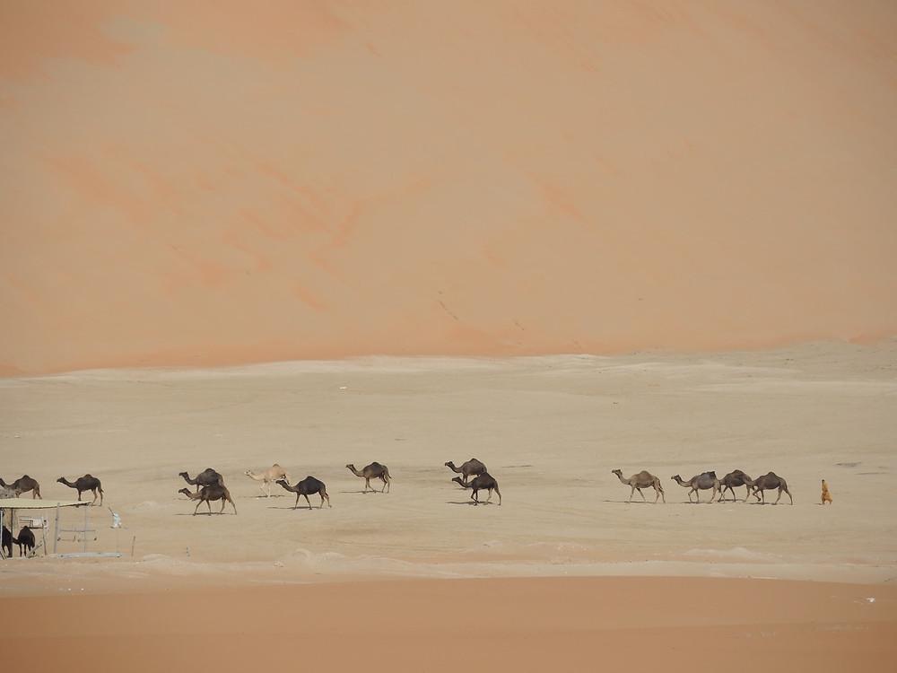 Liwa Oasis - Desert Safari