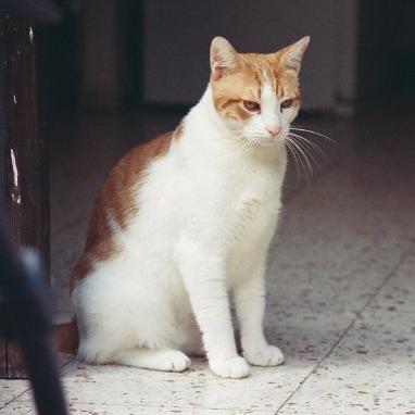 집 고양이