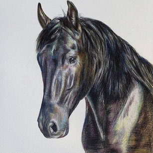Horse Original