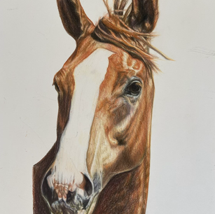 Horse Commission 'Odyssey'