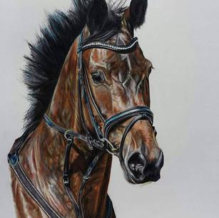 Horse Commission