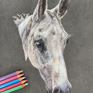 Horse Commission 'Poppy'