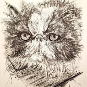 Cat Commission