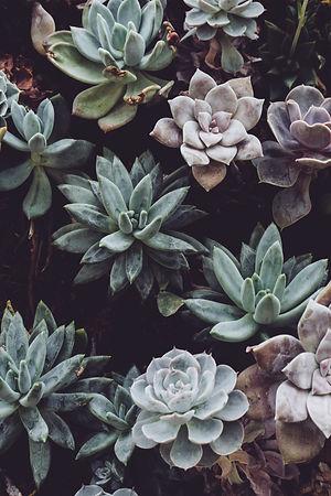 botanical-cactuses-close-up-colors-30582