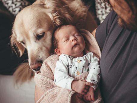 Baby fotoshoot - newborn fotoshoot