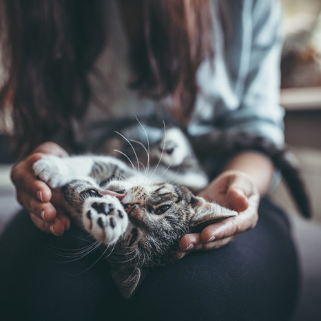 Nieuwe baby kat - Kiwa