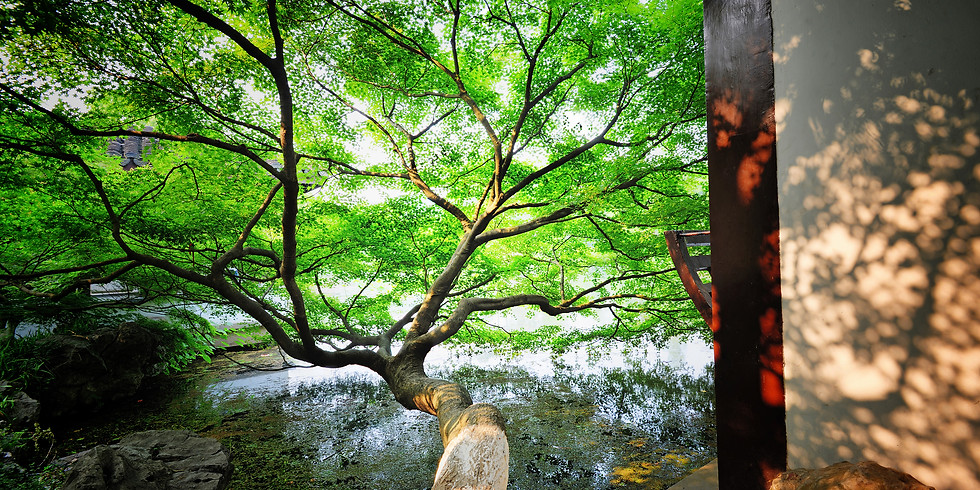 Zhan Zhuang - Der Weg zur wahren Stärke