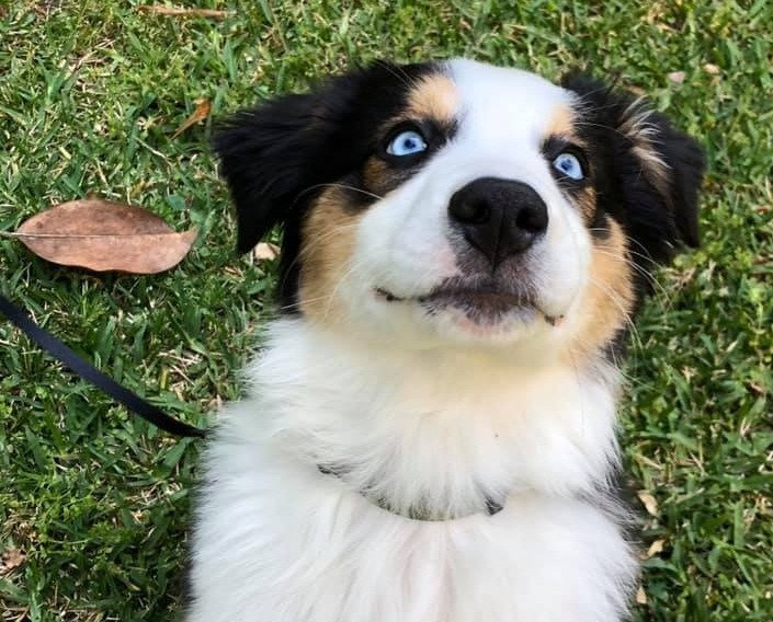 puppy%2520class_edited_edited.jpg