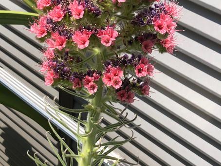 初夏の草花
