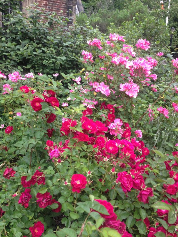 roses mem day '16.JPG