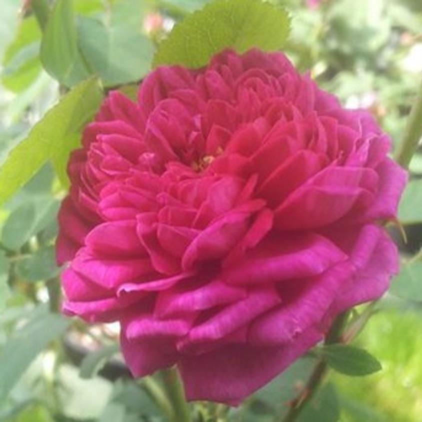 Cérémonie de la Rose