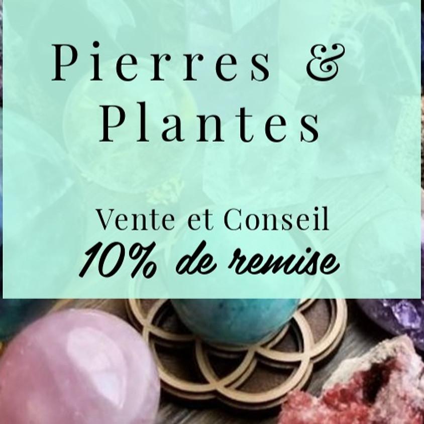 Journée Portes Ouvertes | Pierres & Plantes