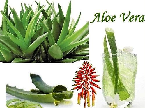 Organic Aloe Vera Gel  8oz