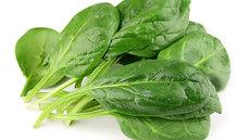 Bunch Headless Spinach (1 bag/210g)