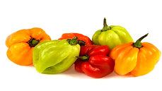 Jamaican hot pepper(approx 150g) - 1pack