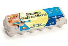Free Run Large Eggs 12PK