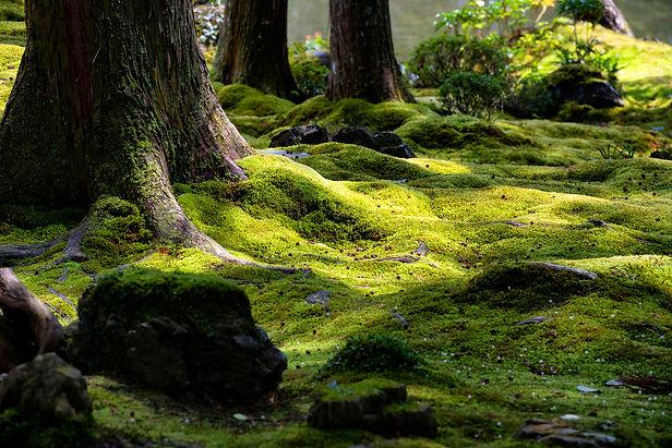 moss-garden-i83292 (1).jpg