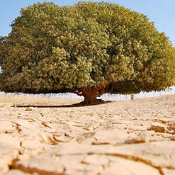 The Blessed Tree Ibadah Tours 2.JPG