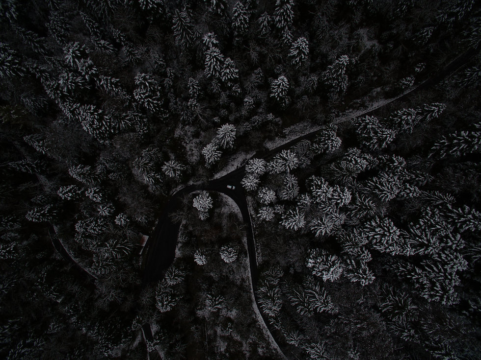 tree-forest-rock-black-and-white-texture