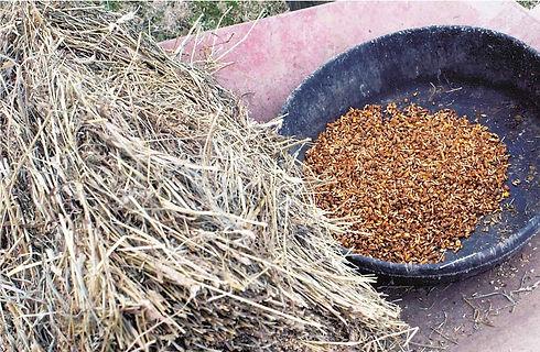 hay-and-grain-1.jpg