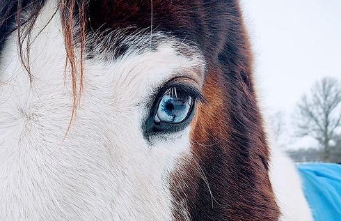 sky blue eye.jpg
