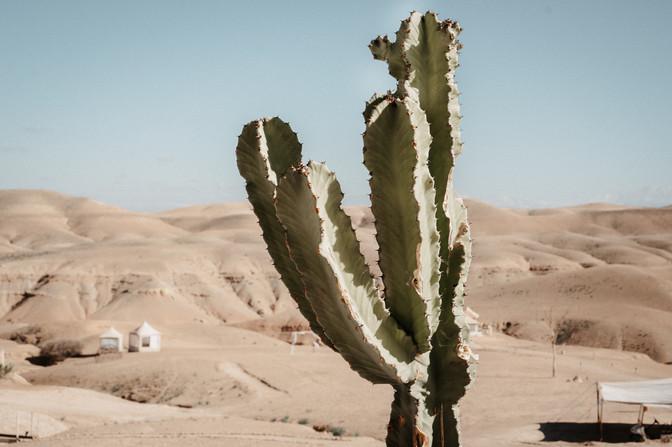 Wüstenhochzeit