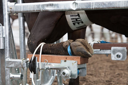 Front Hoof in Wrangler Winched Front Foot Assembly