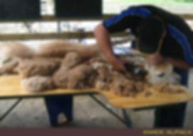 Kiwick Alpaca Shearing Table