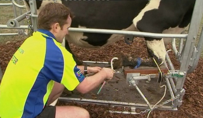 Young Farmers put their best foot forward