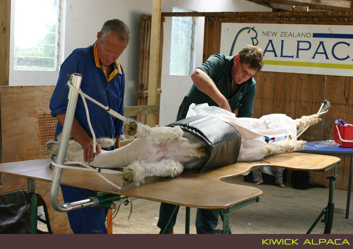 Kiwick Alpaca Sheering Table