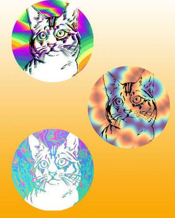 hippie kitties, original digital design for magnet or pinback