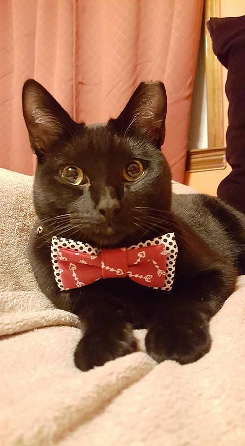 custom valentines day pet bow!