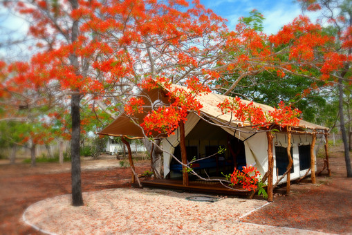 Tent front with flame tree_edited.jpg