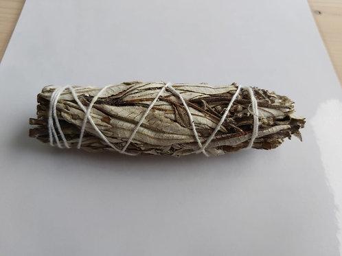 Herbe sainte (ou Yerba santa)